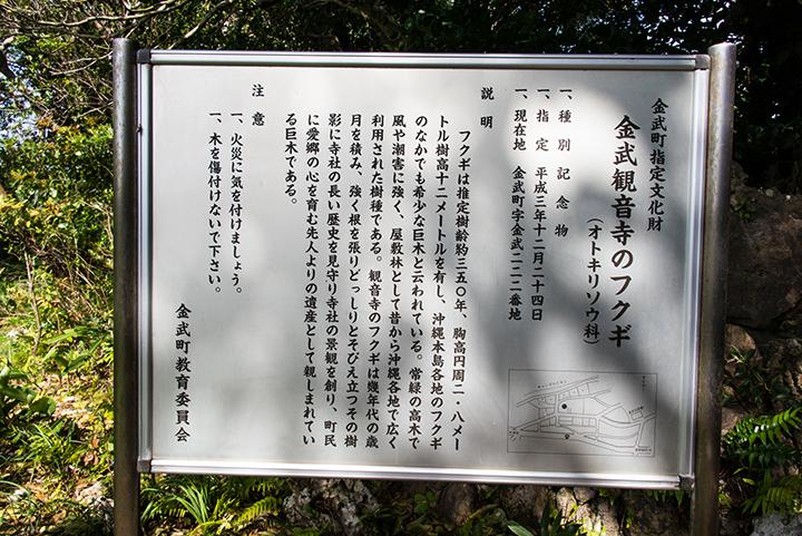 칸온지의 후쿠기(복나무)