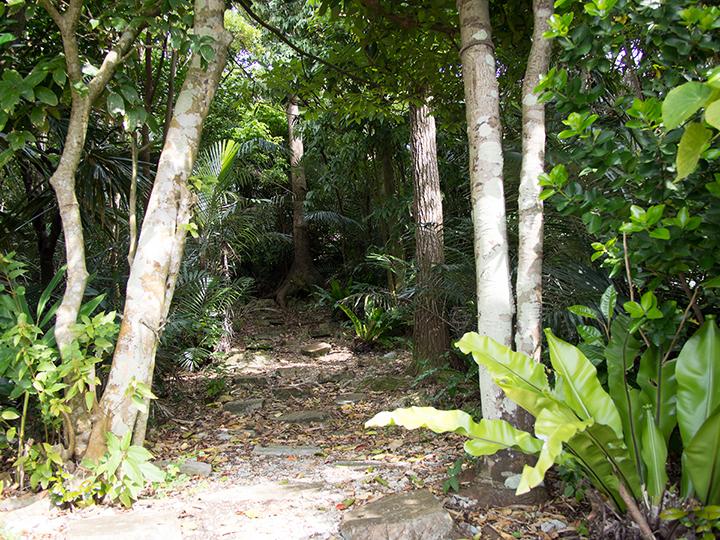 Tumusuzu Sacred Grove